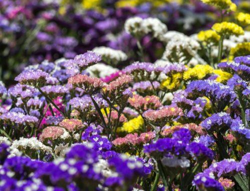 Resolución Definitiva de autorizaciones de venta para la Temporada de las Flores